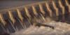 Free the Snake: Restoring America's Greatest Salmon River