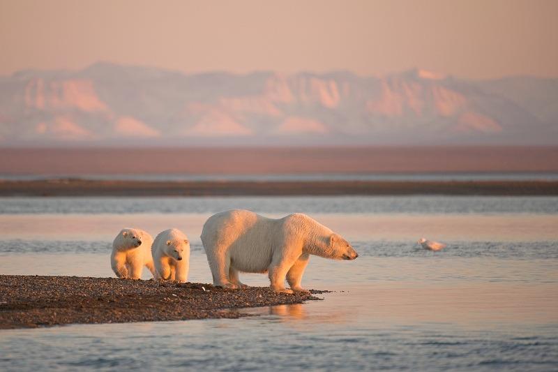 Steven Kazlowski LeftEyePro dot com Arctic Refuge Coastal Plain_2