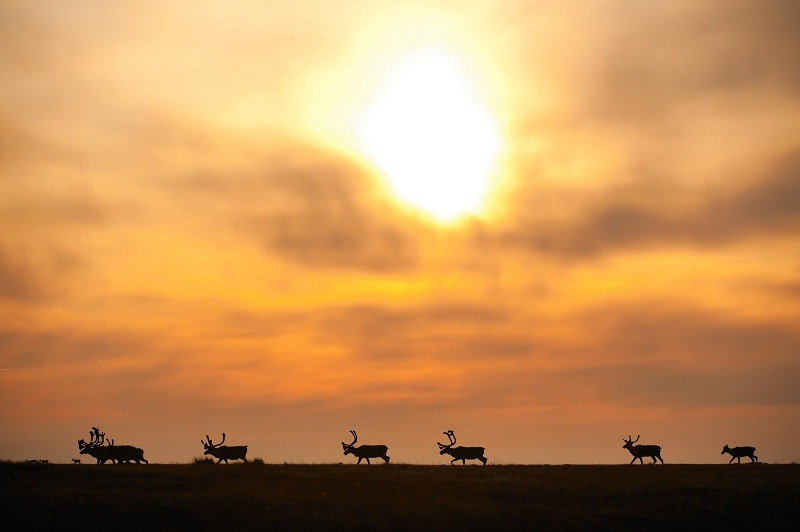 Florian Schulz www dot VisionOfTheWild dot com Arctic National Wildlife_2