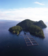 Freedom To Roam and Oceans As Wilderness: Eye On Aquaculture
