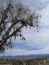 R.I.P., Shoe Tree