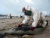 A Surfer Remembers the Prestige Oil Spill in Spain