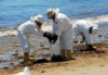 All Better Now? The Refugio Oil Spill, Three Months On