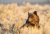 Two Big Threats to Yellowstone – Take action now