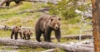 An Open Letter to President Obama on America's Bears and How You Can Help