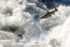 Doubling Down on the Broken Promise of Fish Hatcheries