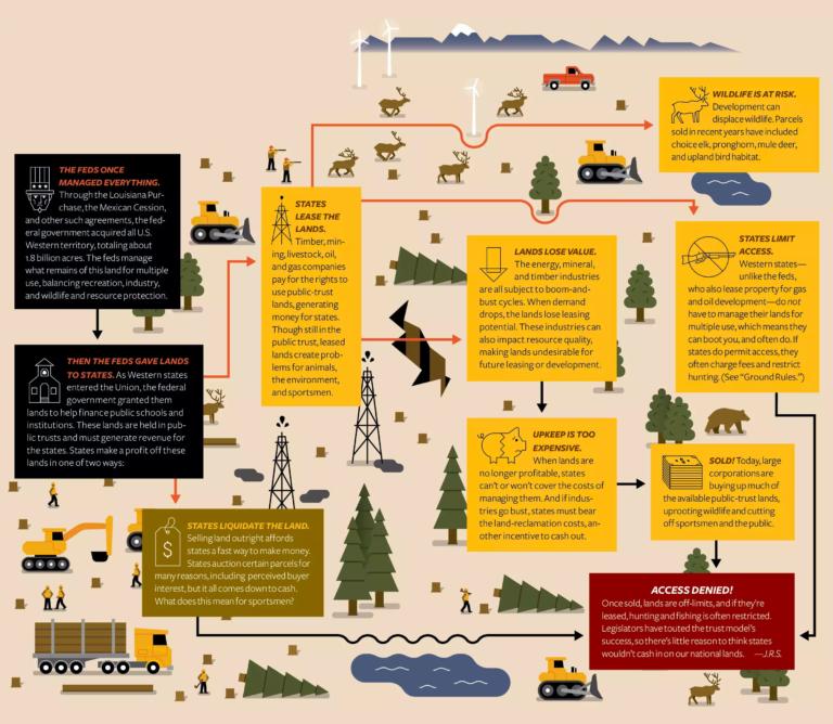 Illustration: Field & Stream