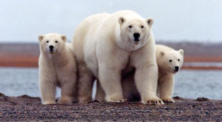 Photo: U.S. Fish and Wildlife Service