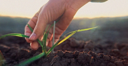 Organic Standards Stem from the Soil