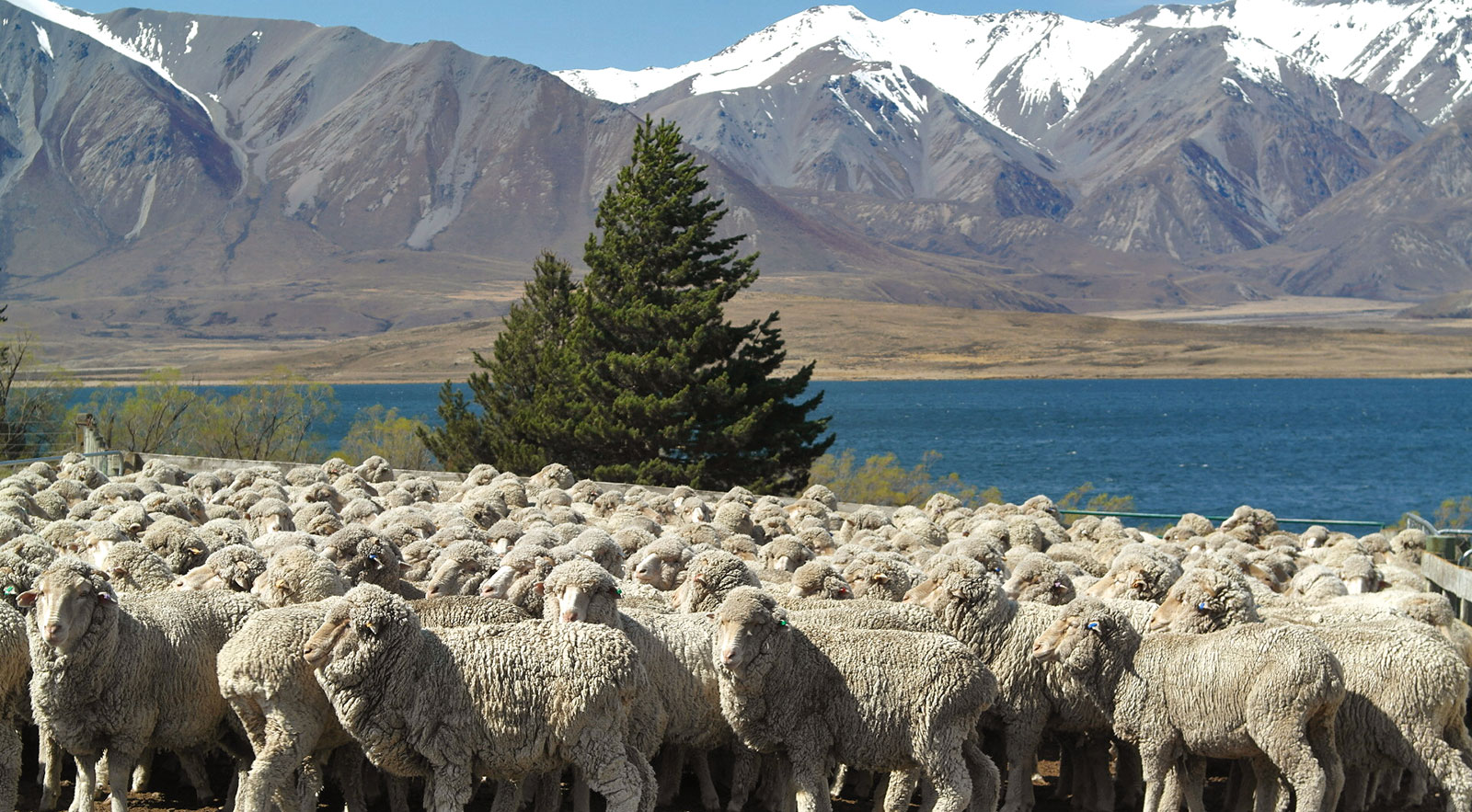 All Our Wool Is Now Certified to the Responsible Wool Standard - Patagonia