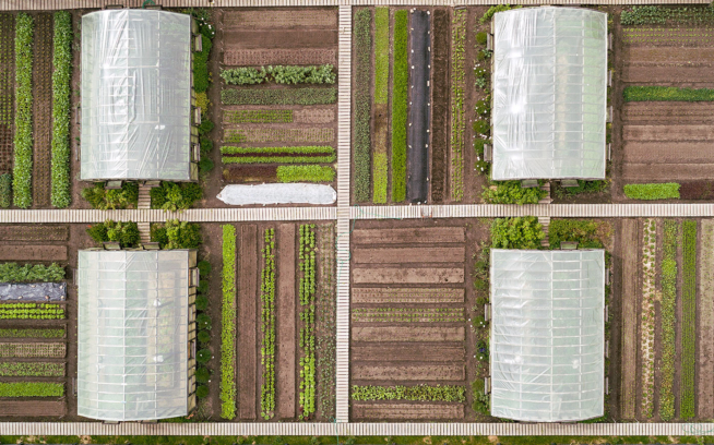 The biointensive garden at Parque Patagonia in summer, from above. More than 30 different crops in an orchestra of flavors. Photo: James Q Martin