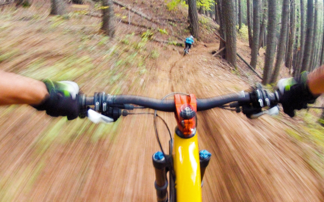 A highly sociable, capable and forward-thinking creature, the Yellow-Framed Pedaler has been known to build, ride and share trails in California's Downieville area. Photo: Scott Markewitz