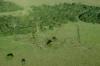 Rewilding Iberá