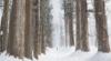 Treeline: The Core