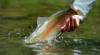 Home Pool, Sulphur Creek: Losing a Favorite Fishing Spot to Climate Change