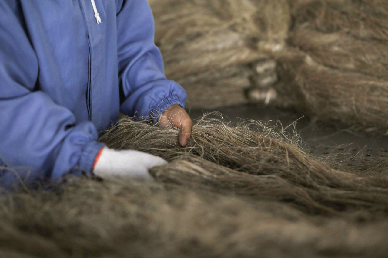 Once dried, workers compile the fiber strands, preparing them for another wash. Photo: Lloyd Belcher