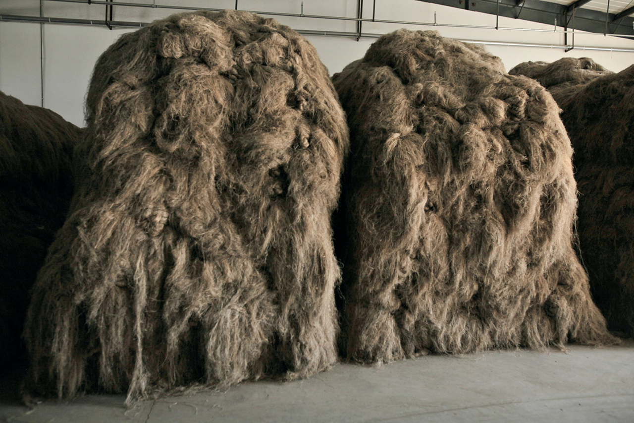 After stripping down the exterior fibers, the result is hair-like fibers. Farmers fling them around, tie them in the center and form bundles that look like wigs. They then grab each bundle by its knot, heave it around and throw it in a pile. The fibers now feel like bristled horse hair. Photo: Lloyd Belcher