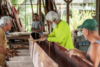 Restoring a Traditional Hawaiian Koa Canoe on O'ahu