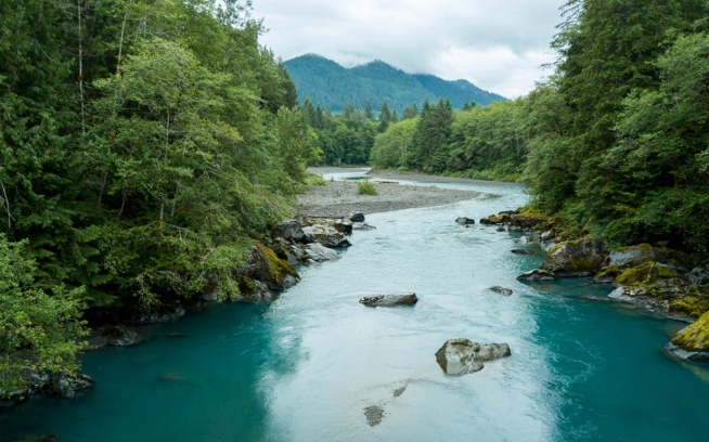 The Elwha River has been dam-free for less than two decades  whereas the Hoh River—running from the flanks of Mount Olympus to the Pacific Ocean on the Olympic Peninsula's western edge—remains one of the state's few uninterrupted rivers, largely due to its location in Olympic National Park. Photo: Colin Wiseman