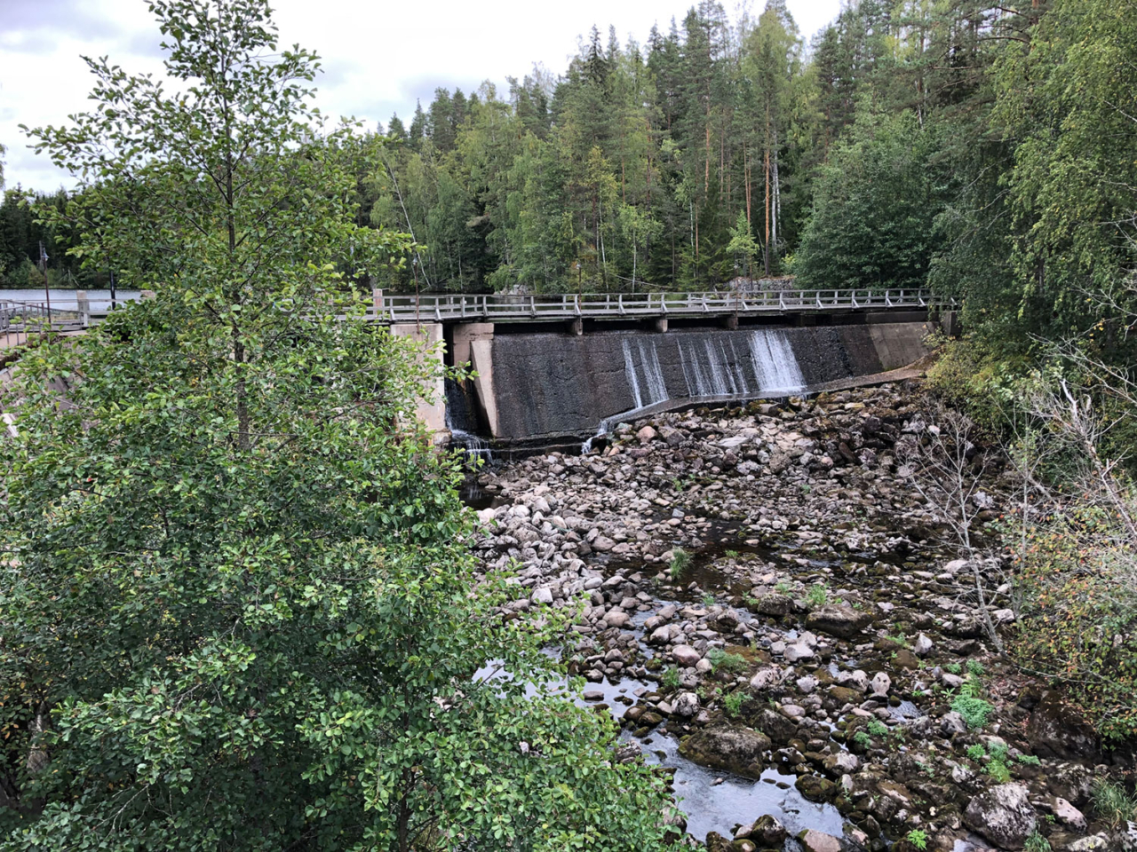 Situated only a half mile from Russian border in Finland, the Kangaskoski dam is the first barrier migrating salmon face in the Hiitolanjoki River — it's also the first of the three Hiitolanjoki River dams scheduled to meet the bulldozer, starting in 2021. Photo: South Karelian Foundation for Recreation Areas