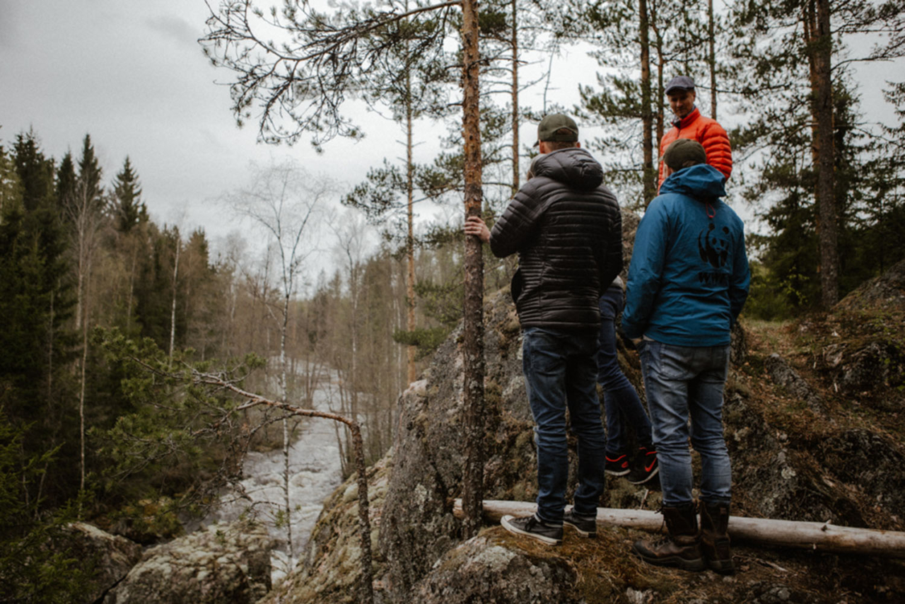 After removal of three downstream dams, this tributary of the Hiitolanjoki will be a passage for land-locked salmon from Lake Ladoga. Photo: Ira Aaltonen