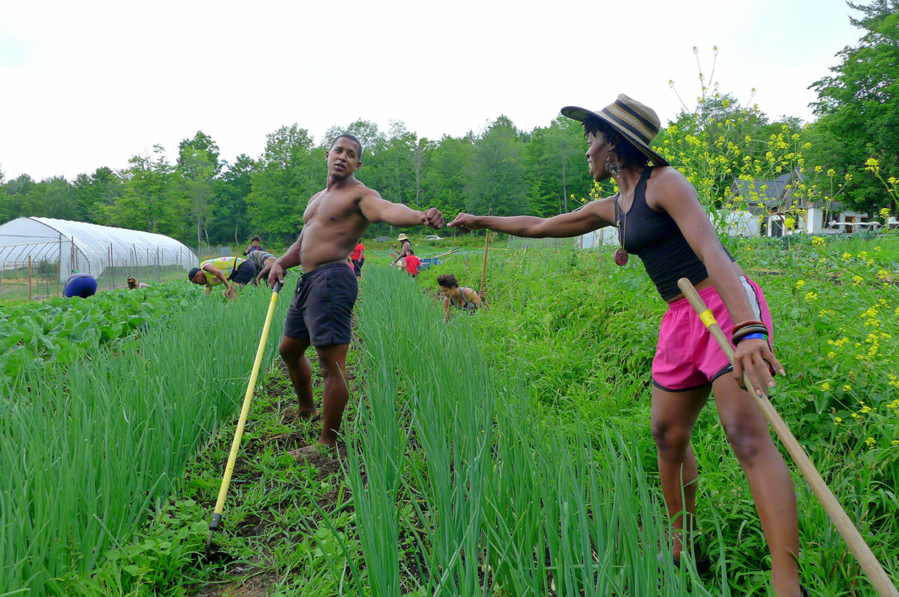 """Fist bump between two participants in Soul Fire Farm's Black Latinx Farmers Immersion, a weeklong, rigorous introduction to small-scale sustainable farming that balances the nerdy explication of concepts like """"soil cation exchange capacity"""" with the cultural and historical teachings necessary for Black and Brown people to heal their relationships to land. Photo: Leah Penniman"""