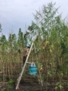 So, You Want to Be a Regenerative Hemp Farmer?