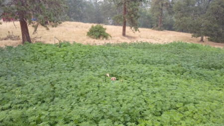 So, You Want to Be a Regenerative Hemp Farmer?