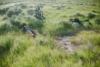 A Pedal Through the Prairie