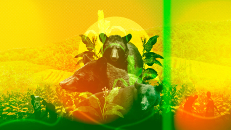 Black Bears, Black Liberation