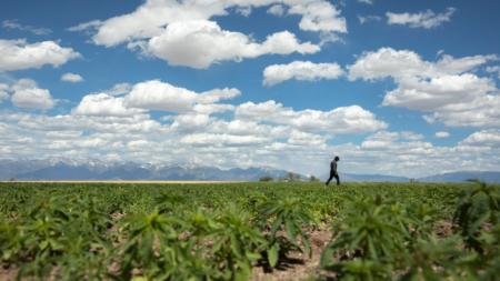 Bring Hemp Home: Colorado