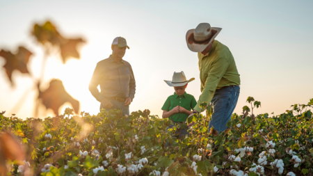 How We Got Here: Organic Cotton