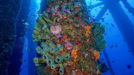 More Corals. More Fish.